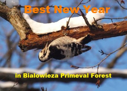 Best Christmas in Primeval Forest